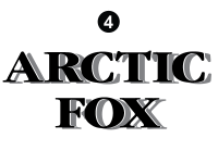 Arctic Fox - 2002 Arctic Fox Camper - Camper Rear and Side Fox Letters